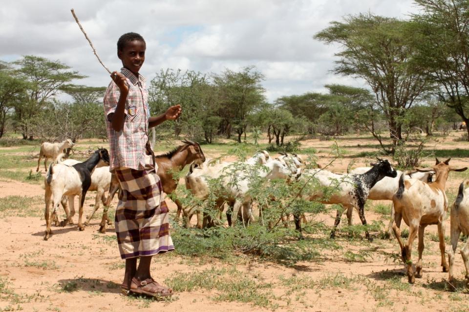 Herder2
